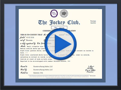 digital_cert_video